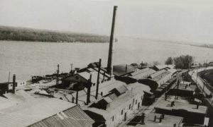 SARTID 1913